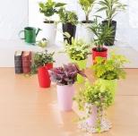 リブ ウィズ グリーン 観葉植物