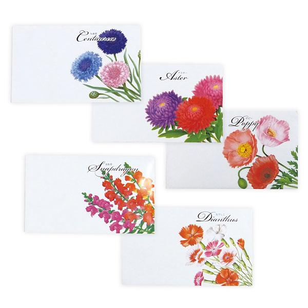 横型イラスト花の種子1個